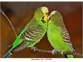 MOVING ALL BIRDS MUST GO  MAKE GREAT PETS FOR CHILDREN AND ADULTS NEED GOOD HOMES ASAP ARE HEAL