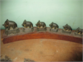 vintage set of 6 elephant opium weights  stand 6000 310-645-9708