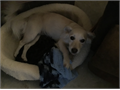 Chloe is a small mixed breed spayed female She is current on shots and is potty trained However s