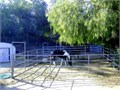 Horse Corrals for Rent 36 feet x 36 feet 100 a month without hay 180 withCall Alan at 951-878-5