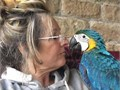 contact for more pics and details of my cute Macaw birdsthey are very friendly and loving