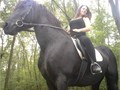 KOKO Dream Friesian and measures just under 16 hands She is trained to drive and is competing succ