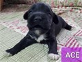 These Mini-Schnauzer puppies are looking for their forever home  They are regis