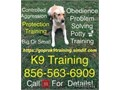 Handling all breed dogs big and small puppy obedience program dea please have an up-to-date shot re