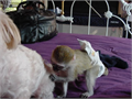 Capuchin Monkeys Available male and female 15weeks old vet checked and ready for new homes these mon