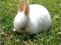 Babies 100 Dwarf Bunnies weaned  ready to go These little guys make a great family pets as they