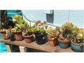 PLANTS IN POTS I HAVE OVER 40 DIVERENT ONES TO CHOOSE FROM