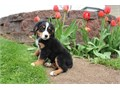 Ready for their new forever homes Now For the most recent info and pictures is
