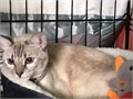1yr very mellow second picture is when she was a tiny kittenMy niece bought her a year ago and coul