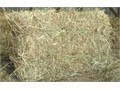 HAY-STRAW LARGE BAGS-FOR MULCHING RABBIT FOOD ART DECORATION  DISPLAYS Perfect for gardening mu