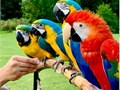 for sale parrotsContact us with your CELL NUMBER  and  EMAIL  ADDRESS so we can get to you faster