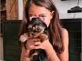 Top quality Male and Female Yorkie puppies100 Purebred Nice and Healthy Vet