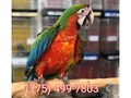 7754997803Do you want a birdText me if interestedThanks