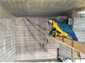 Excellent health  feather  Cage available if picked up no charge