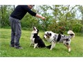 They are well trained good with kids and other pets get back to me with your nu
