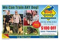 Learn to be a dog trainer  Reasonable rate to learn how to be a professional dog trainer