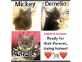 Kittens Sweet loving kittens Males black  black and white Female gray  white All blac