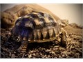 Have a pair meaning male and female sulcata tortoise  There between 4 and 5 years old from what a