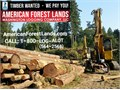 Selling Timber is a great way to manage timber  make money AmericanForestLandscom   CALL 1-800-L