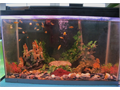 20-Gals tank W-filter light heather decorations and all the fishes for 75