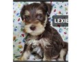She is a precious perfect puppy Meet LEXIE She is the lifelong companion you