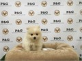 Breed  PomeranianNickname  EnzoDOB July 01 2016Sex MaleApprox Size at Maturity 7-9 l