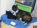 Milo is a energetic fun playful loving full of life 2yr old dog who is protective of the ones she lo