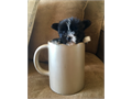 Micro teacup morkie puppies Yorkie  Maltese 1 male and 1 female They are 11 weeks old and super