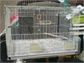 The Bird Cage with new tray very good looking for small birds  asking for  18 if you intereste