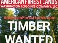 Logging Timber Buckley WA