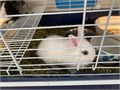 I have 2 bunnies dwarf they are healthy and very friendly I have a mini Rex bunnies