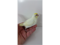Moving sale all my mutations parrotlets and hand feed babies call 6267312715 price starts 70  and u