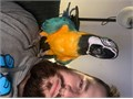I have my blue and gold macaw for sale Not being sold to any fault of his ownwe
