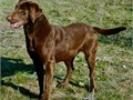 We are Marble Mountain Kennels a professional Labrador retriever breeding and t