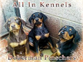 Doberman Pinschers Shots Dewormed Tails Docked Dewclaws Removed EVERYTHIG is Current Sold