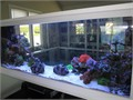 We specialize in designing and installing custom aquariums ponds and aquaponic systems in Orange C