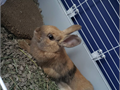 This bunny named Mello will come with all that it has Its a girl Not fixed yet so dont place wit