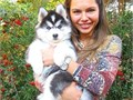 We have male and female Siberian Husky puppies available They are very beautiful 12 weeks old  Th