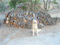 I have about a cord of hardwood firewood  that I will give FOR FREE to any 501-c-3 charity If you