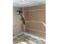 Bonded pair parrotlets ready to breed  can come with cage and nest box asking 180