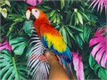 Beautiful Tame  starting to talk Baby Scarlet Macaw for 6200 Now Shipping Nationwide USA No Emai