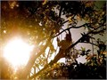 - Minimum 4 yrs experience - Responsible for climbing pruning and removing trees on residential