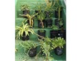 many species 1 gallon succulents and fruiting plants Cash Only 1183 N Bonnie Beach Place Los Angeles