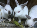 I want to clear some of the older group of bunniesone is 8 weeks oldone is 12 and 3 are 14 weeks