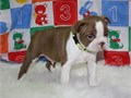 They will come micro chipped and wormed excellent intelligent working dogs and this pup has great p