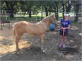 2017 APHA Filly Kits Cutterlena by Kit Dual and Cutters Golden MistBreed  PalominoName  Kits C