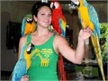 Blue  Gold Macaw Parrot for sale text me at 213 290-x1x9x6x3