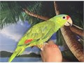 Beautiful Handfed Baby Red Headed Amazon Parrot for 2200 Now Shipping Nationwide USA Dont Email