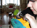 Extremely parrots for adoption They are very healthyvery playful They have the most amazing ice