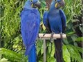 Count down A-Z WE ARE LOOKING FOR GOOD LOVING AND CARING HOME FOR THE BIRDS THEY